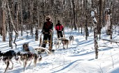 Expedition-traineau-chiens